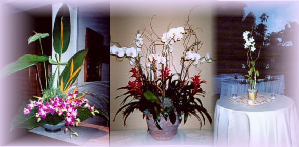 For Additional Information Or Special Orchid Requests Send Us An E Mail Or  Call 305.510 5506.